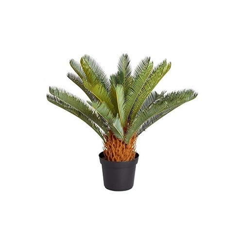 Sago Plam / Cycas Plant, 1Pc