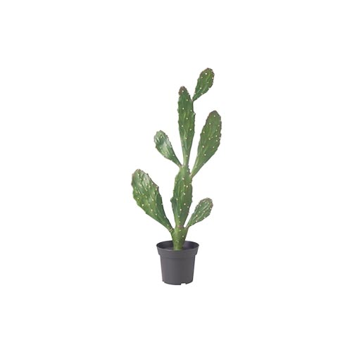 Green Cactus Plant with Nursery Pot, 1Pc