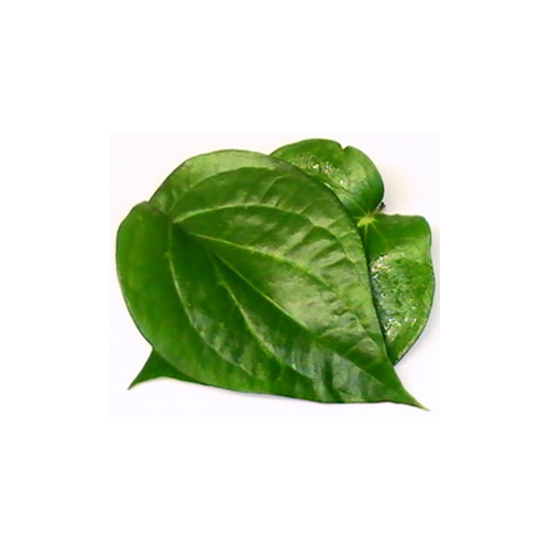Betel Leaves, Mithapati Pan, 10 Pc